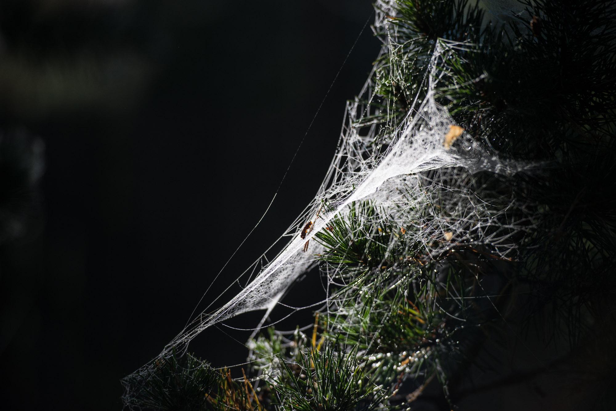Spindelnät en höstmorgon i stockholms skärgård